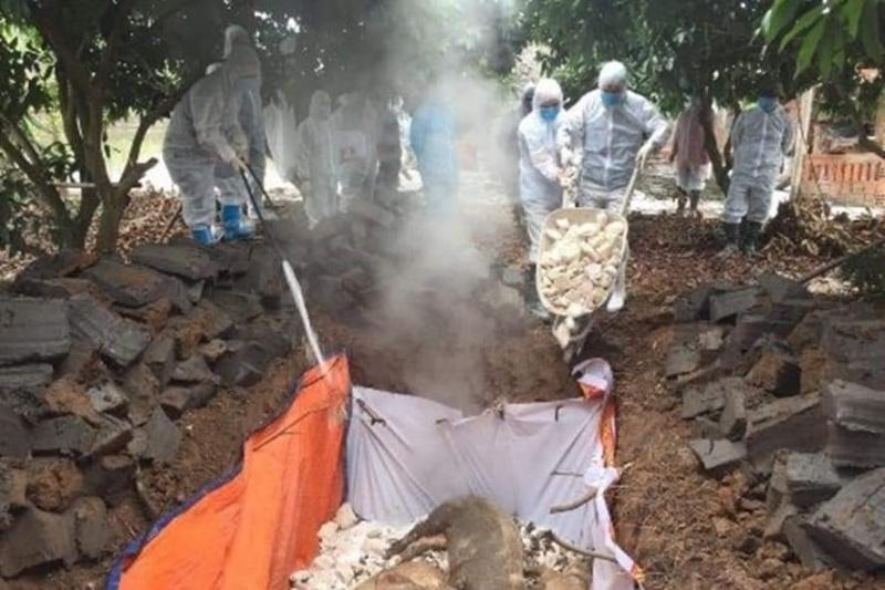 Quảng Nam:  Phát hiện ổ dịch tả lợn Châu Phi tại huyện Duy Xuyên