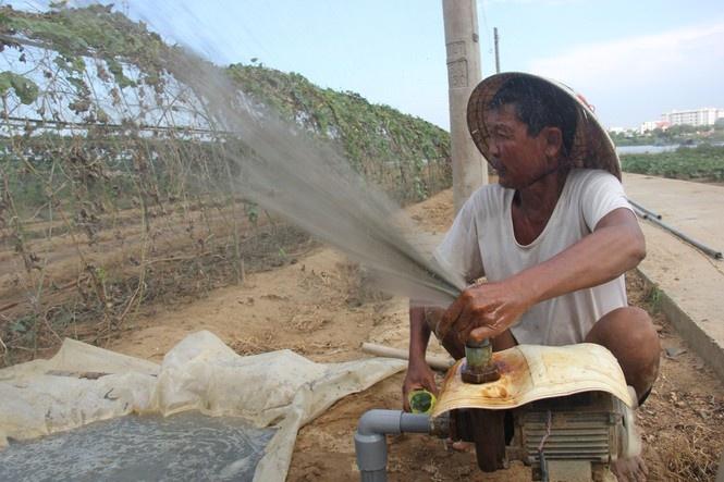 Đà Nẵng: Vùng rau sạch La Hường khốn đốn vì nước nhiễm mặn