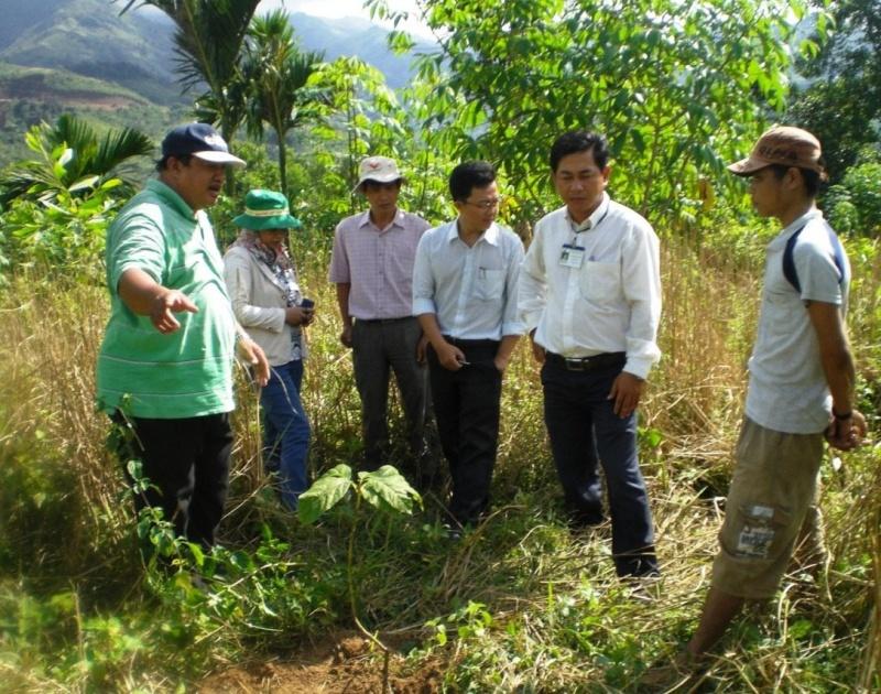 Quảng Ngãi: Trồng rừng thay thế được hơn 200 ha