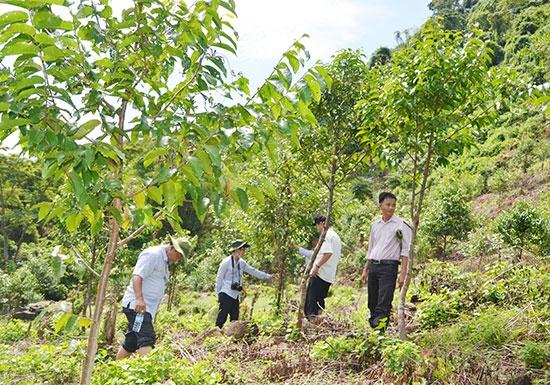 Quảng Ngãi: Tăng cường quyền tiếp cận sử dụng dịch vụ đất đai cho đồng bào thiểu số