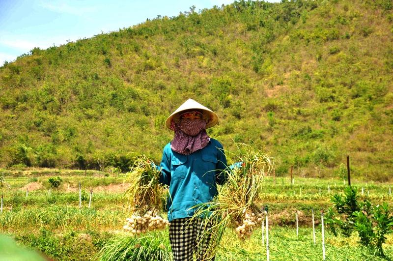 """Quảng Ngãi: Tìm hướng """"giải khát"""" cho huyện đảo Lý Sơn"""
