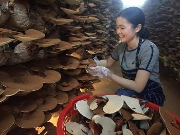 quang ngai 11 san pham dat tieu chuan ocop