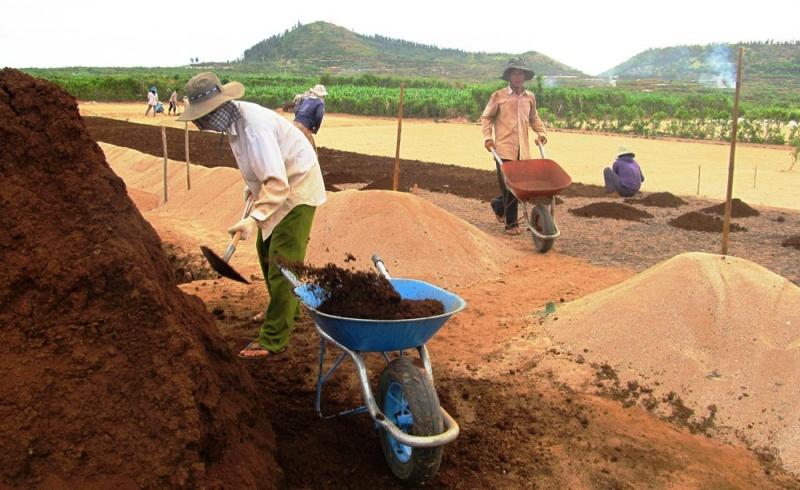 Quảng Ngãi: Đảo Lý Sơn loay hoay tìm hướng xử lý đất thải nông nghiệp