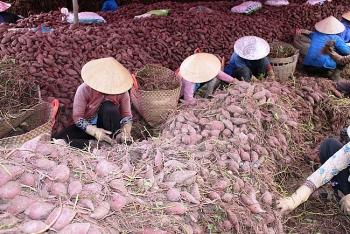 Trung Quốc siết chặt nhập khẩu, nông sản Việt Nam lao đao