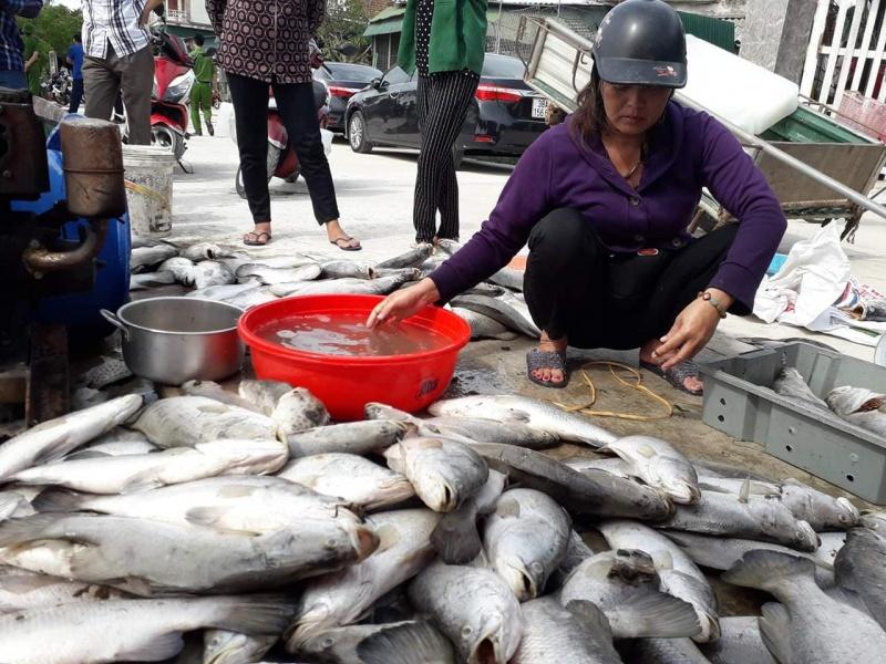 Cá chết hàng loạt ở Hà Tĩnh do môi trường nước thay đổi đột ngột