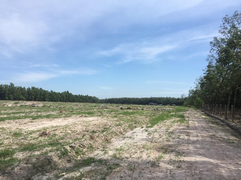 """Vẽ dự án """"ma"""" trên đất trồng cây lâu năm, công ty Ba Thành Phát bán đất nền trái phép cho khách hàng?."""