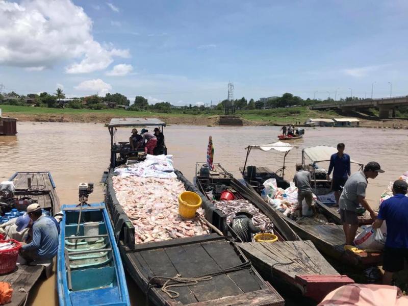 Cá nuôi lồng chết bất thường trên sông La Ngà (Đồng Nai) đã lên tới 1.000 tấn