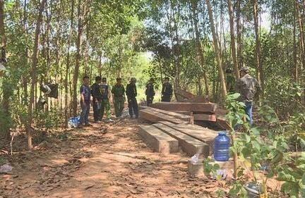 Đắk Lắk: Điều tra hiện trường khai thác gỗ lớn tại huyện Ea Kar