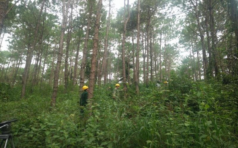 Kon Tum: Công ty Nguyên liệu giấy Miền Nam quản lý tốt công tác phòng cháy chữa cháy rừng