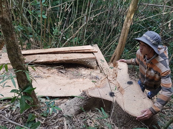 Đắk Lắk: Triệu tập 7 đối tượng tham gia phá rừng đặc dụng Nam Ka