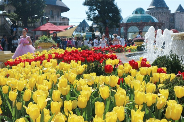 Bà Nà rực rỡ sắc xuân với 1.5 triệu bông hoa tulip đẹp lộng lẫy