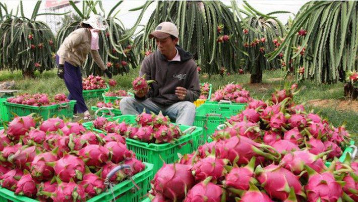 Xuất khẩu rau quả sang Hàn Quốc tăng 3,47%