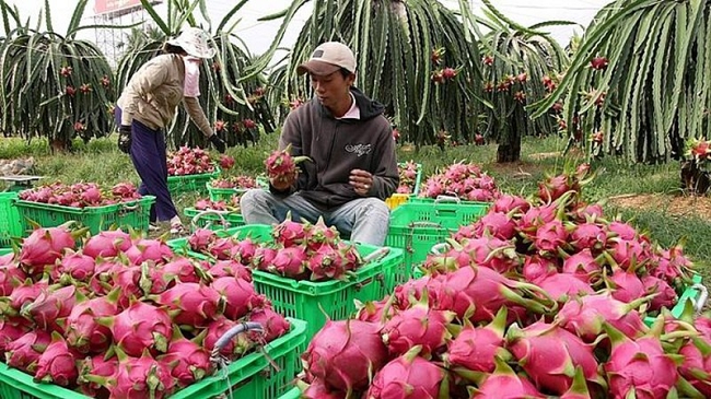Lời giải cho bài toán tăng xuất khẩu rau quả sang thị trường EU