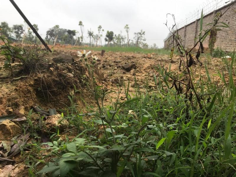 UBND thị xã Phổ Yên sẽ kiểm tra lại phương án chuyển đổi mục đích sử dụng đất cho bà Trần Thị Sinh
