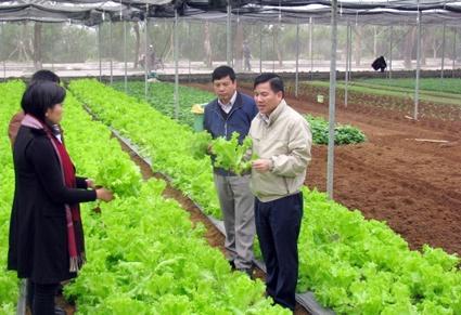 Hòa Bình: Tập trung phát triển về nông nghiệp hữu cơ