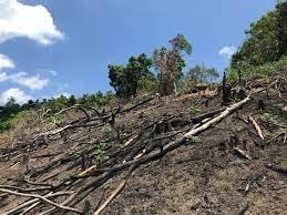 Tây Sơn – Bình Định: Phát hiện thêm vụ phá rừng nghiêm trọng tại vùng giáp ranh