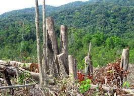 Phú Yên: Khởi tố các vụ phá rừng ở Sơn Hòa