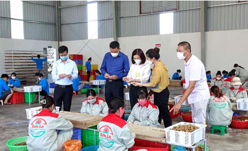 Sơn La: Khi cấp ủy vào cuộc tiêu thụ nông sản cho nhân dân