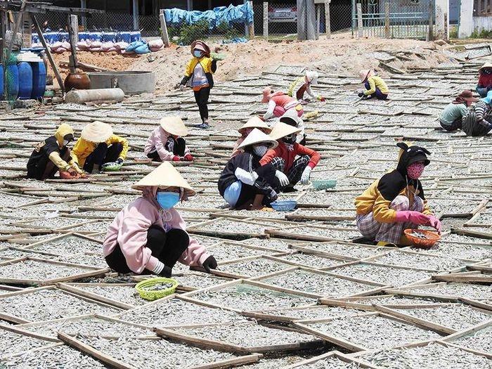 Ninh Thuận: Thú vị nghề hấp cá biển tại huyện Ninh Hải