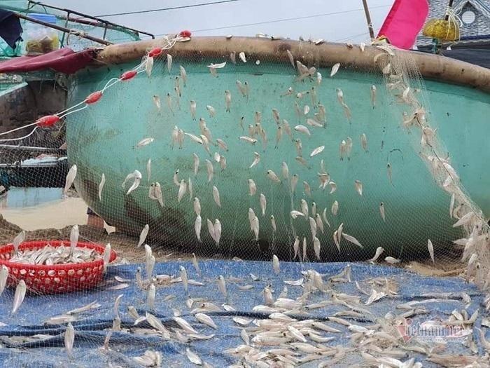 Bà Rịa - Vũng Tàu: Ngư dân 'trúng đậm' trong ngày đầu được đi biển trở lại
