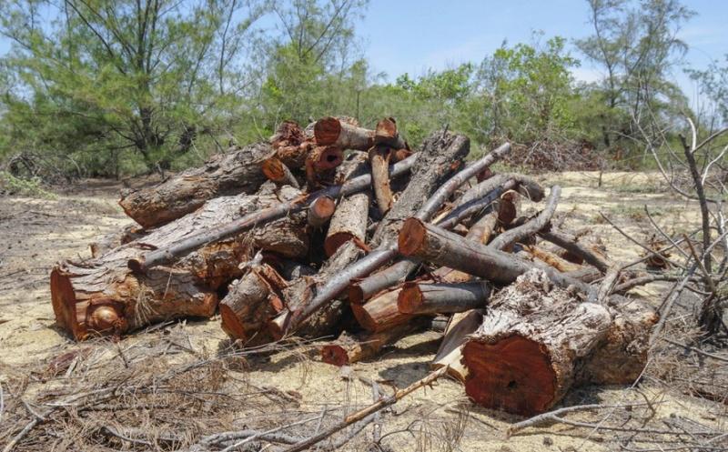 Tổng cục Lâm nghiệp lên tiếng sau các vụ phá rừng ở Bình Định