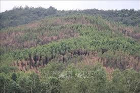Bình Định: Khu vực đất rừng phòng hộ giáp ranh Gia Lai bị xâm chiếm