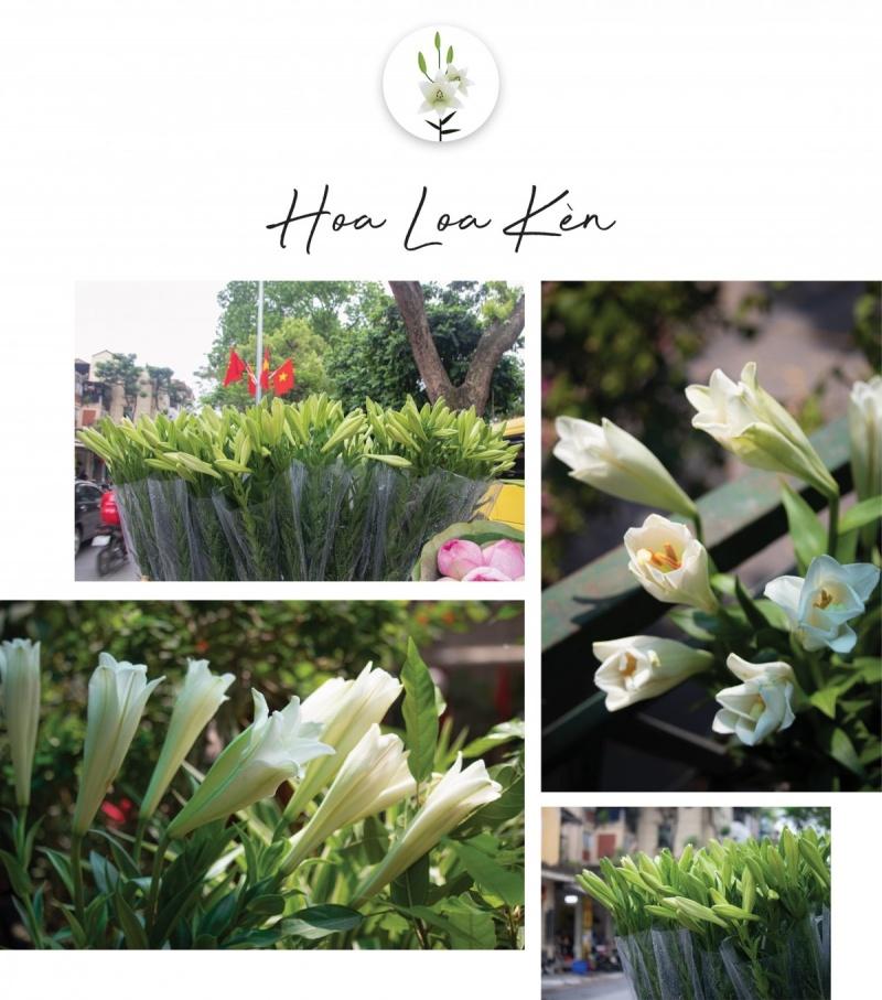 Hè về Hà Nội rực rỡ sắc hoa