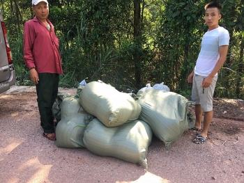 Quảng Ninh: Bắt giữ 80.000 con cá trê giống Trung Quốc nhập lậu