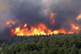 Quảng Ninh: Huy động hàng trăm lượt người chữa cháy rừng tại TP. Uông Bí