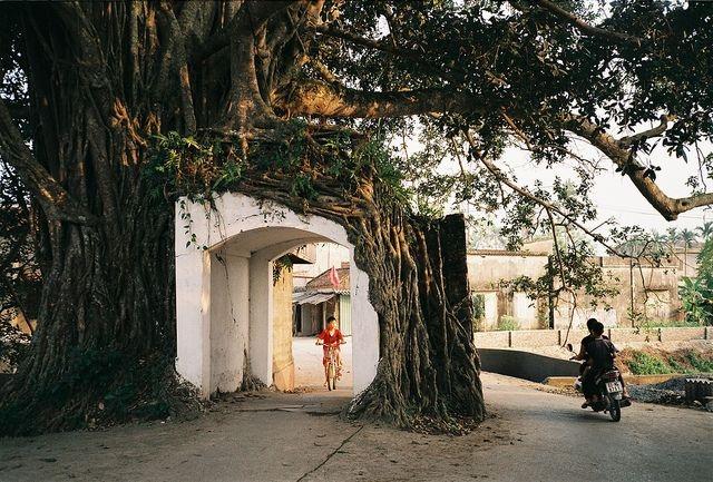 Văn hóa làng – tâm hồn Việt