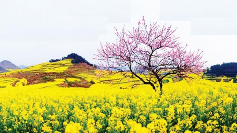Xúc cảm mùa xuân