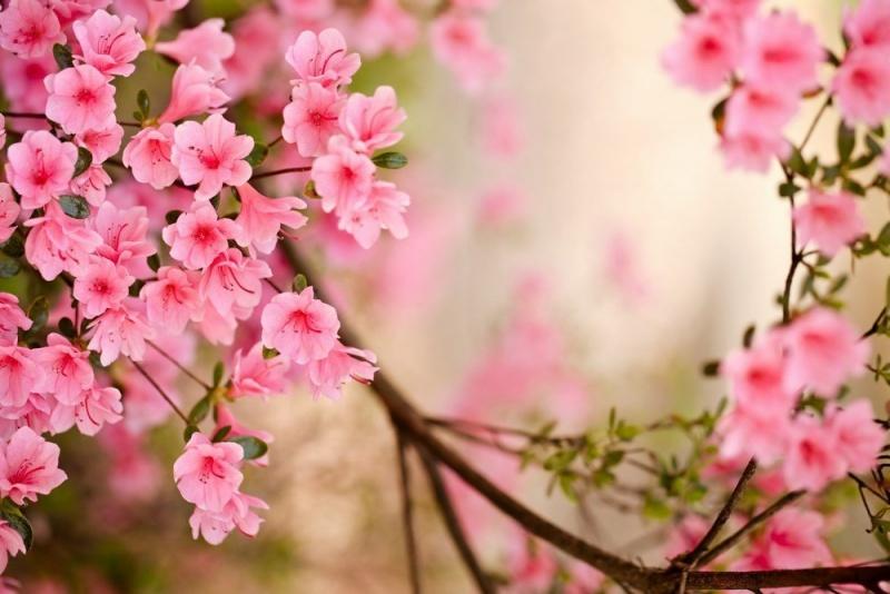 Điều kỳ diệu của mùa Xuân
