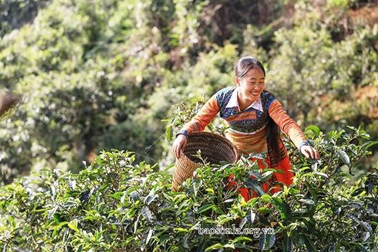 Sơn La: Xây dựng Tà Xùa trở thành trung tâm du lịch của huyện Bắc Yên