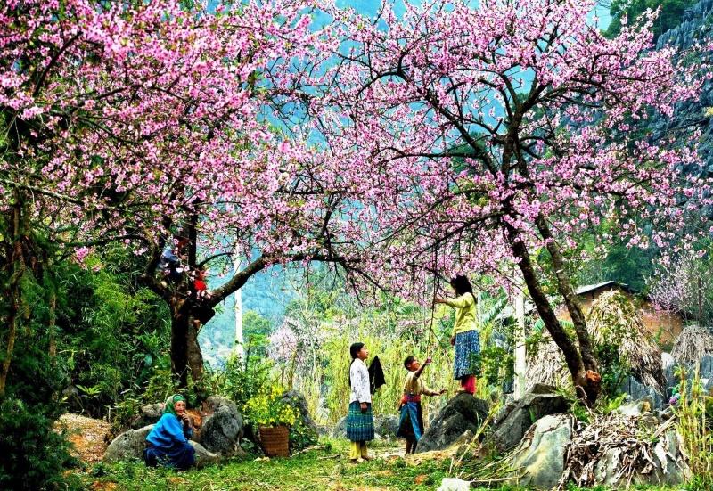 """Tết """"cấm rừng"""" – nét đẹp văn hóa của đồng bào HMông"""