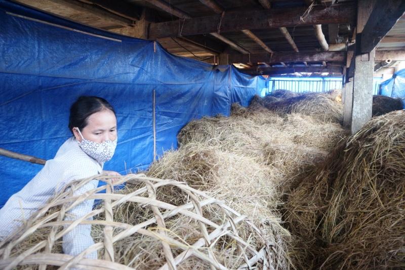 Chị Lan vươn lên thoát nghèo từ mô hình trồng nấm