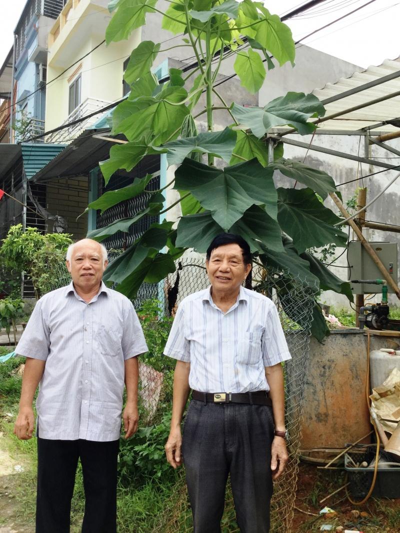 Cây Hông - Cây xóa đói giảm nghèo ở Hà Giang?