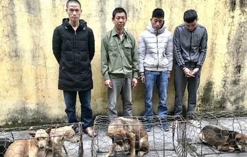 Bắt giữ nhóm đối tượng chuyên trộm chó