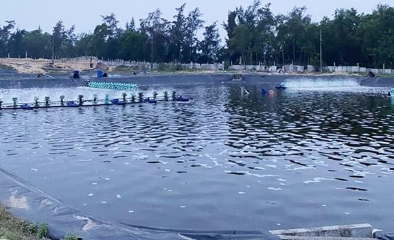 Xả nước thải ra biển, một cơ sở nuôi tôm bị phạt 15 triệu đồng