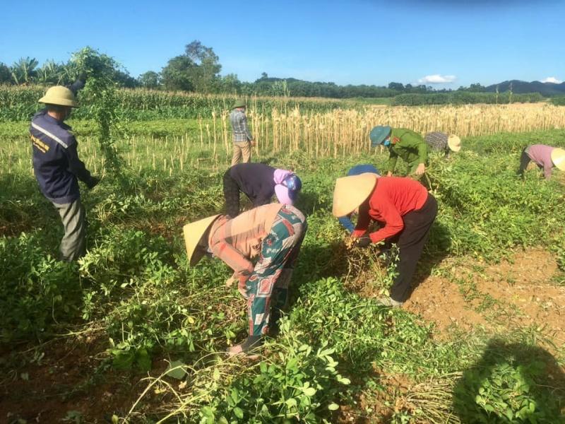 Hà Tĩnh: Chung sức giúp người dân cách ly thu hoạch mùa màng