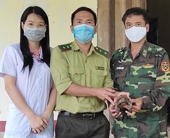 Hà Tĩnh: Tiếp nhận một cá thể rùa Sa Nhân quý hiếm
