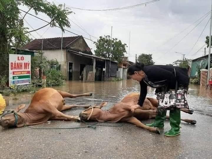 Miền Trung thiệt hại nặng nề do mưa lũ