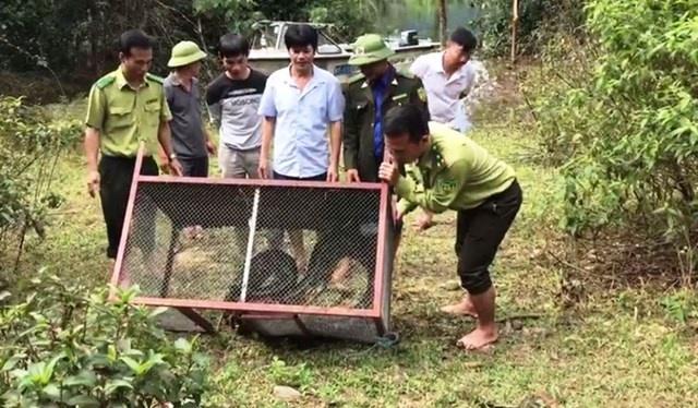 Bắt được trăn gấm khủng dài 3m, nặng hơn 35 kg