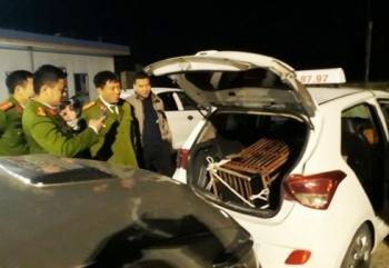 Bắt giữ xe taxi chở cá thể gấu hơn 100kg
