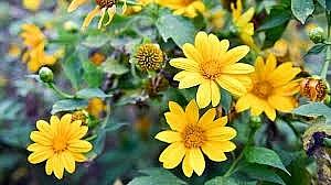 mien hoa dai hanh trinh tu noi dau den mien hoa thom qua ngot