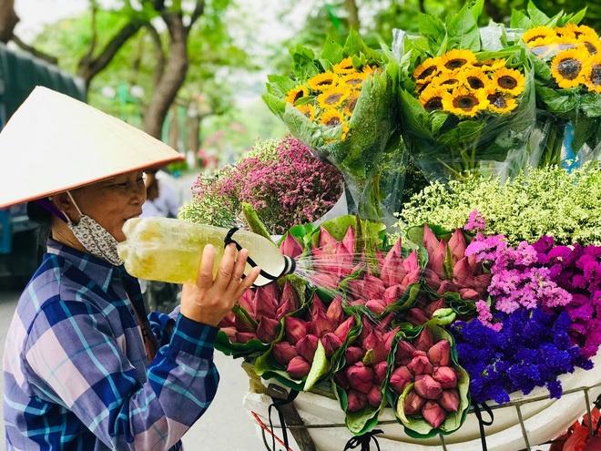7 bí quyết phân biệt cực nhanh giữa Sen và Quỳ được chị bán hoa chia sẻ