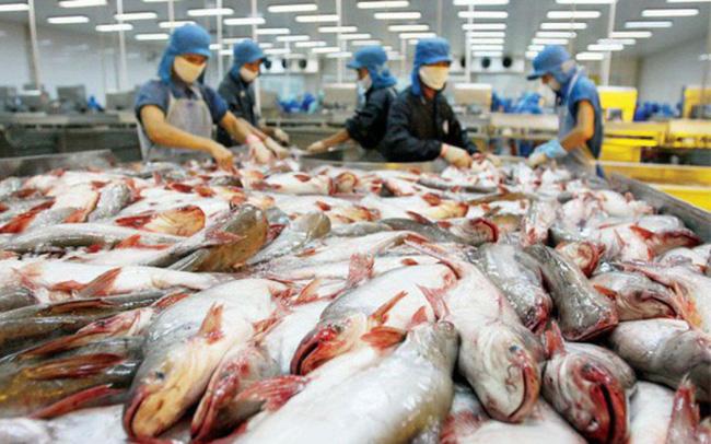 Cần sớm tháo gỡ khó khăn để các doanh nghiệp cá tra sớm quay lại sản xuất