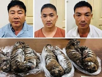"""Án phạt 6 năm tù giam cho """"ông trùm"""" buôn bán hổ xuyên quốc gia"""