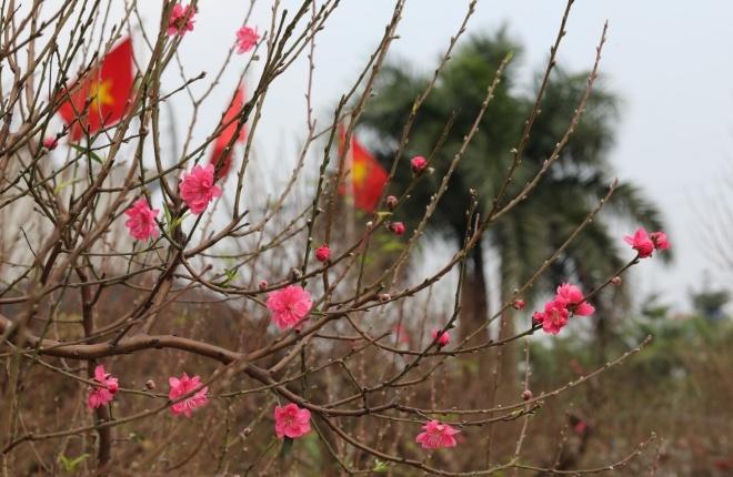 Nâng lên giá trị của đào Nhật Tân