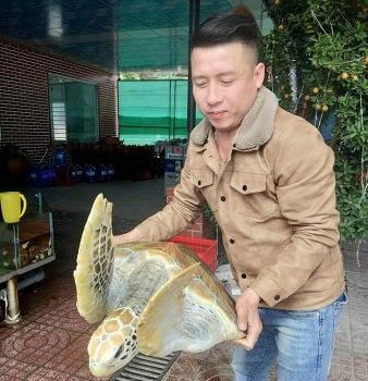 Chăm sóc rùa quý hiếm nặng 30 kg để thả về biển