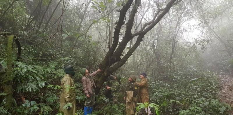 Giữ nét đẹp hoang sơ của Vườn quốc gia Phia Oắc - Phia Đén